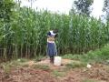 Cogiendo agua del pozo
